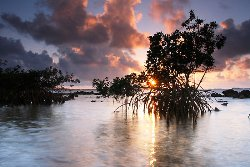 The Beauty of Mangroves